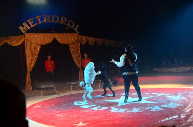 Image result for drezúra cirkus
